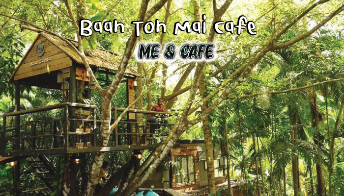 Baan Ton Mai Café ร้านสุดชิวกลางป่า กระบี่
